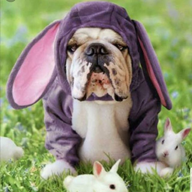 Happy Easter everyone! Enjoy your day! We will be closed Monday to Wednesday this week and will reopen at 10am on Thursday  #easter #easterbreak #family #furbaby #pawsitivelylb