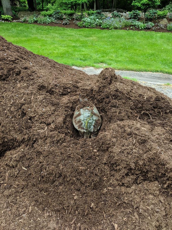teresa's turtle.jpg