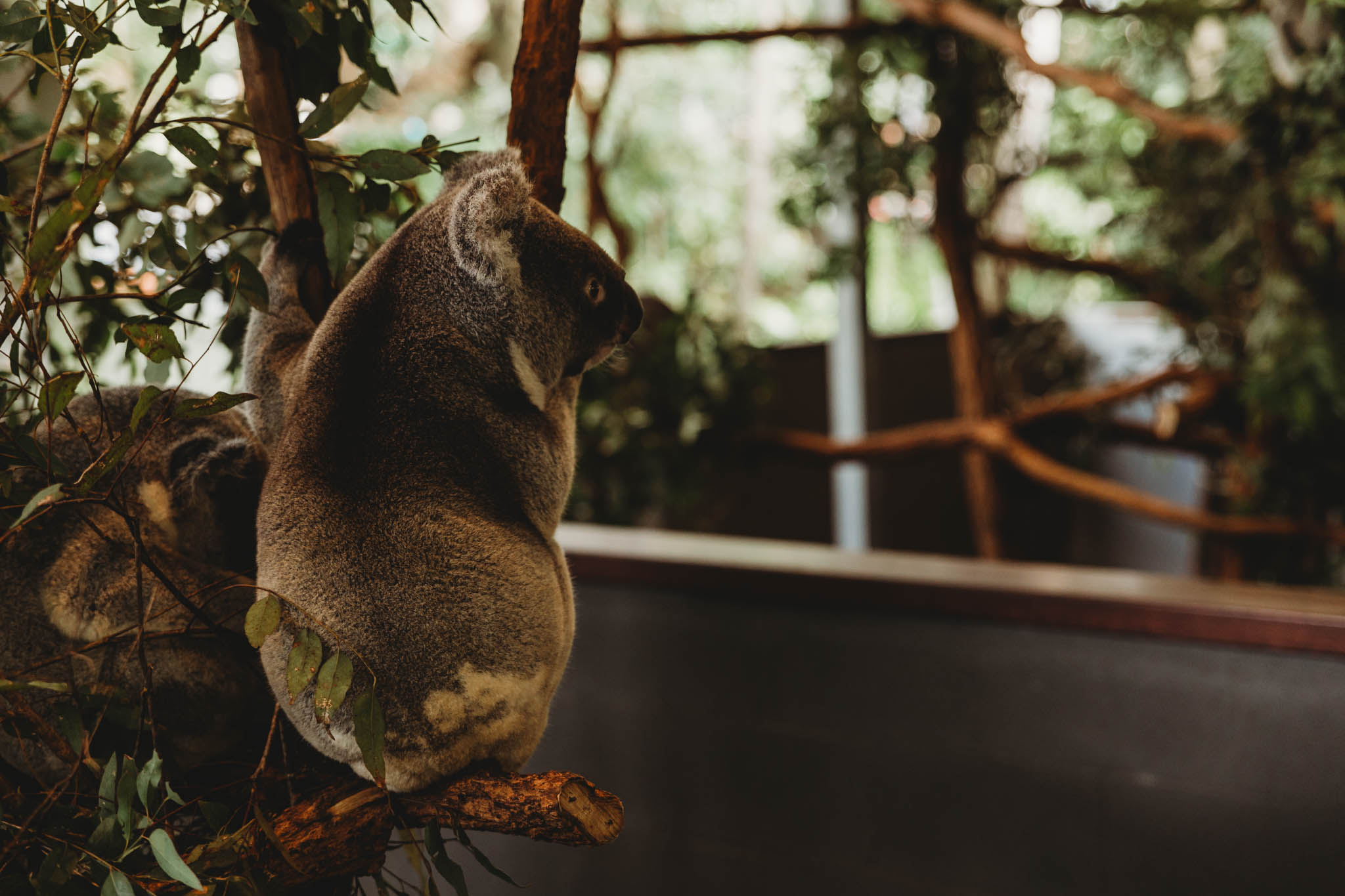 Australia-8140.jpg