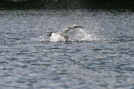 2004-NS Ltl Clr Isle bath-5tw.jpg