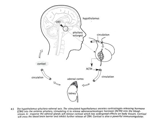 Source : Butler, D.S. (2000) The Sensitive Nervous System. Adelaide, Australia: NOI Group Publications