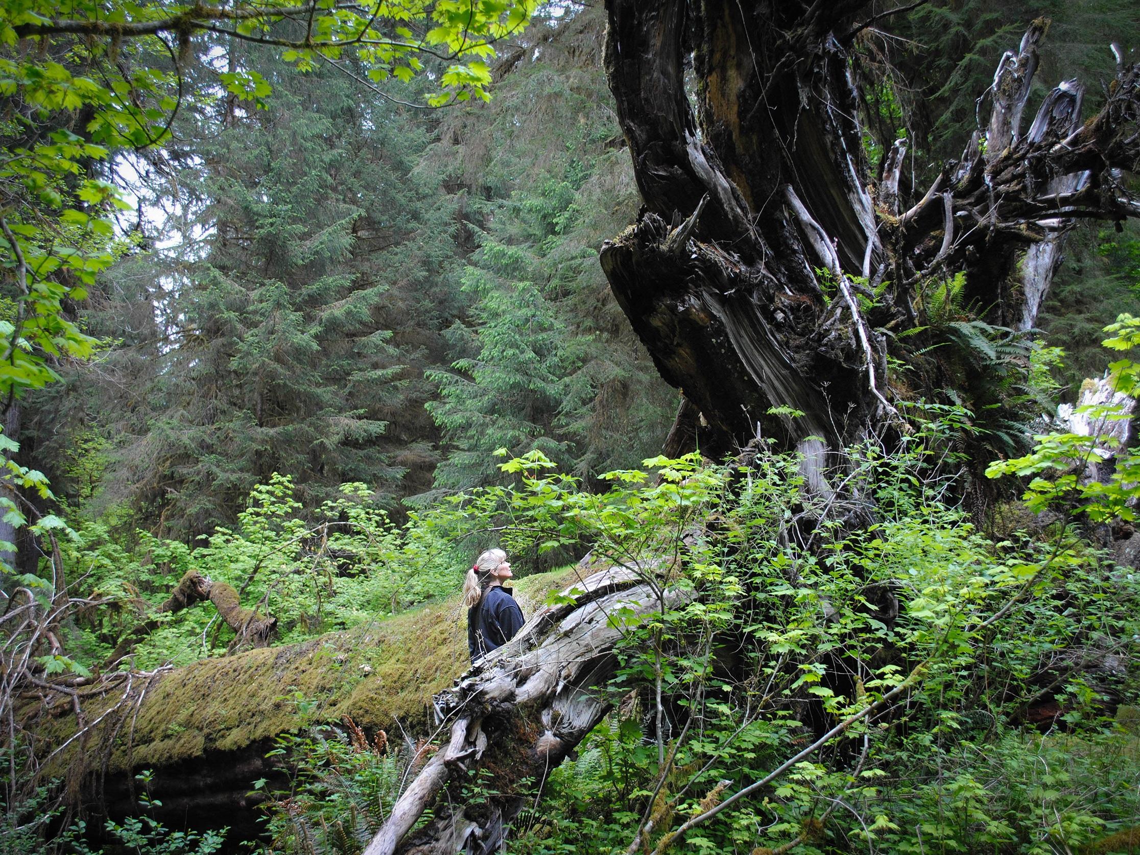 Laurie-Nelson_Rainforest_hike.jpg
