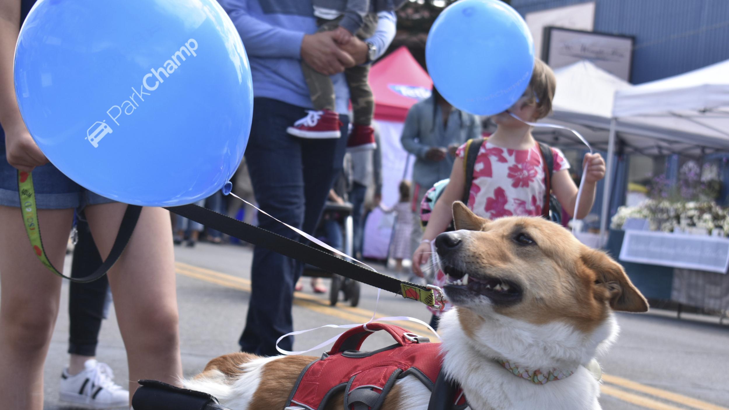 ParkChamp Dog