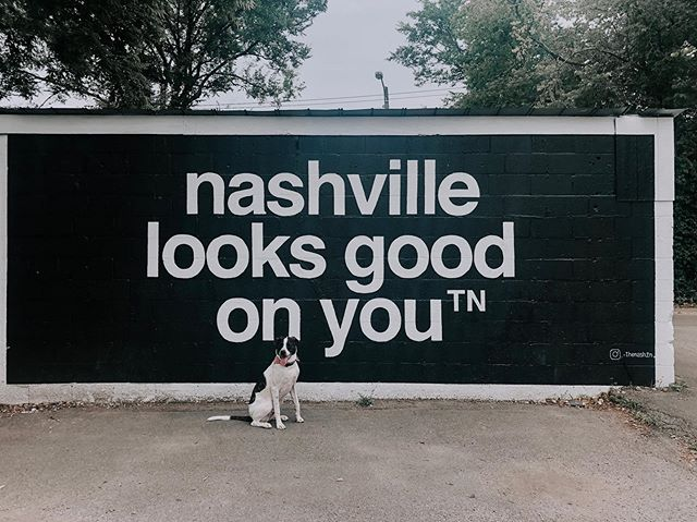 Nashville looks good on you, pup.