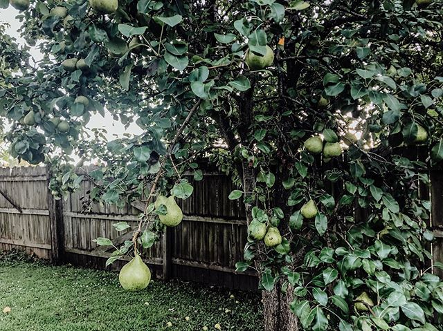 grow my pretty pears! 🍐