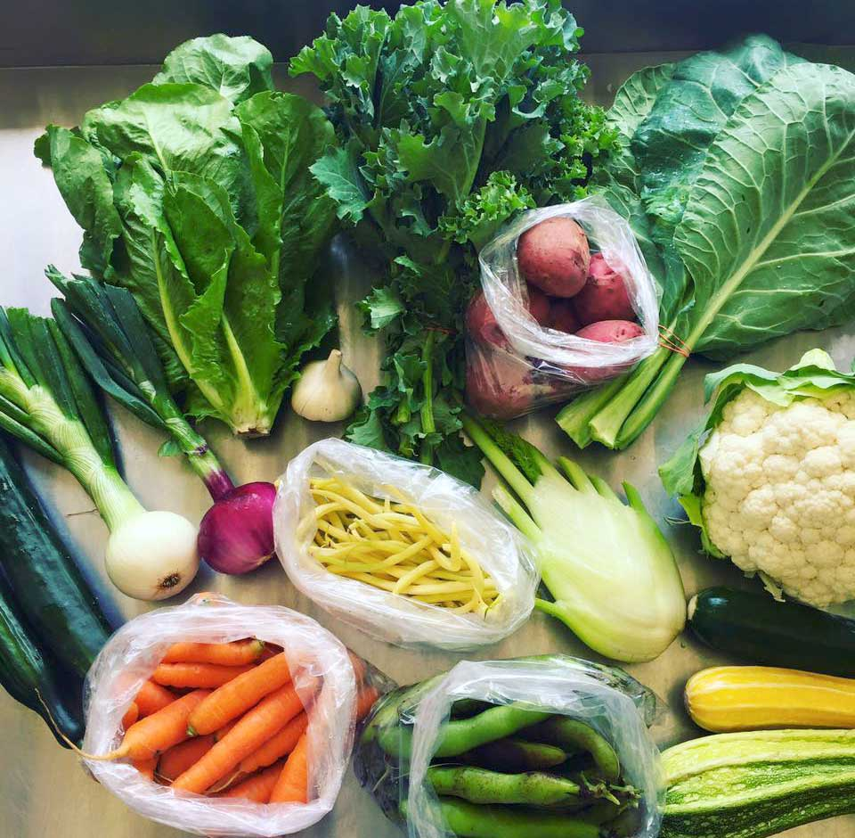 Sign up for our CSA (Community Shared Agriculture) Program