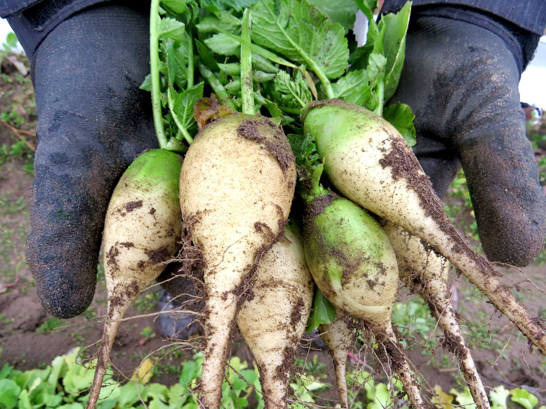 White-beets-(002).jpg