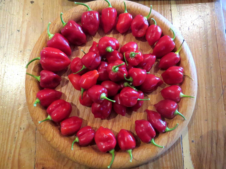 peppers-(002).jpg