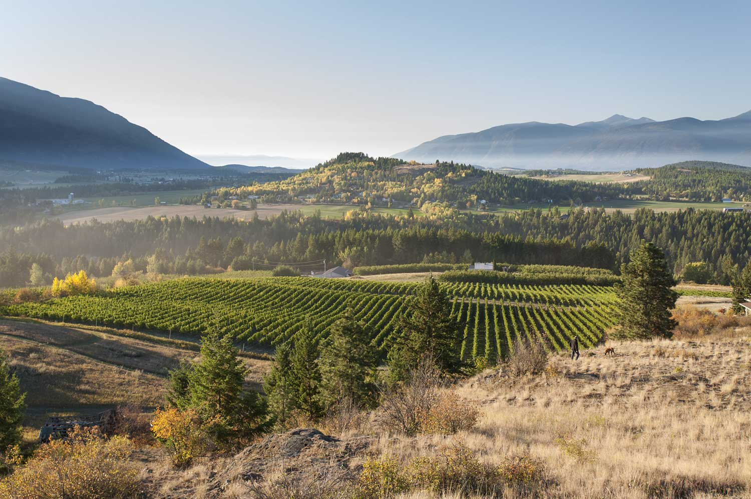 Discover BC's Wine Regions - Learn More