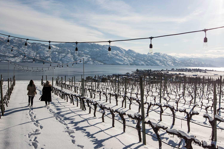 Quails-Gate-Winery-Winter-Vineyard.jpg