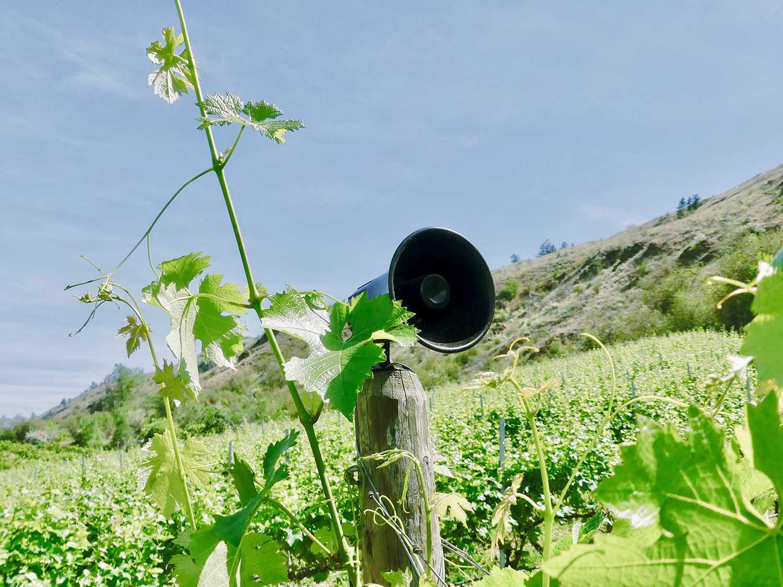 Vineyard-Speaker-2.jpg