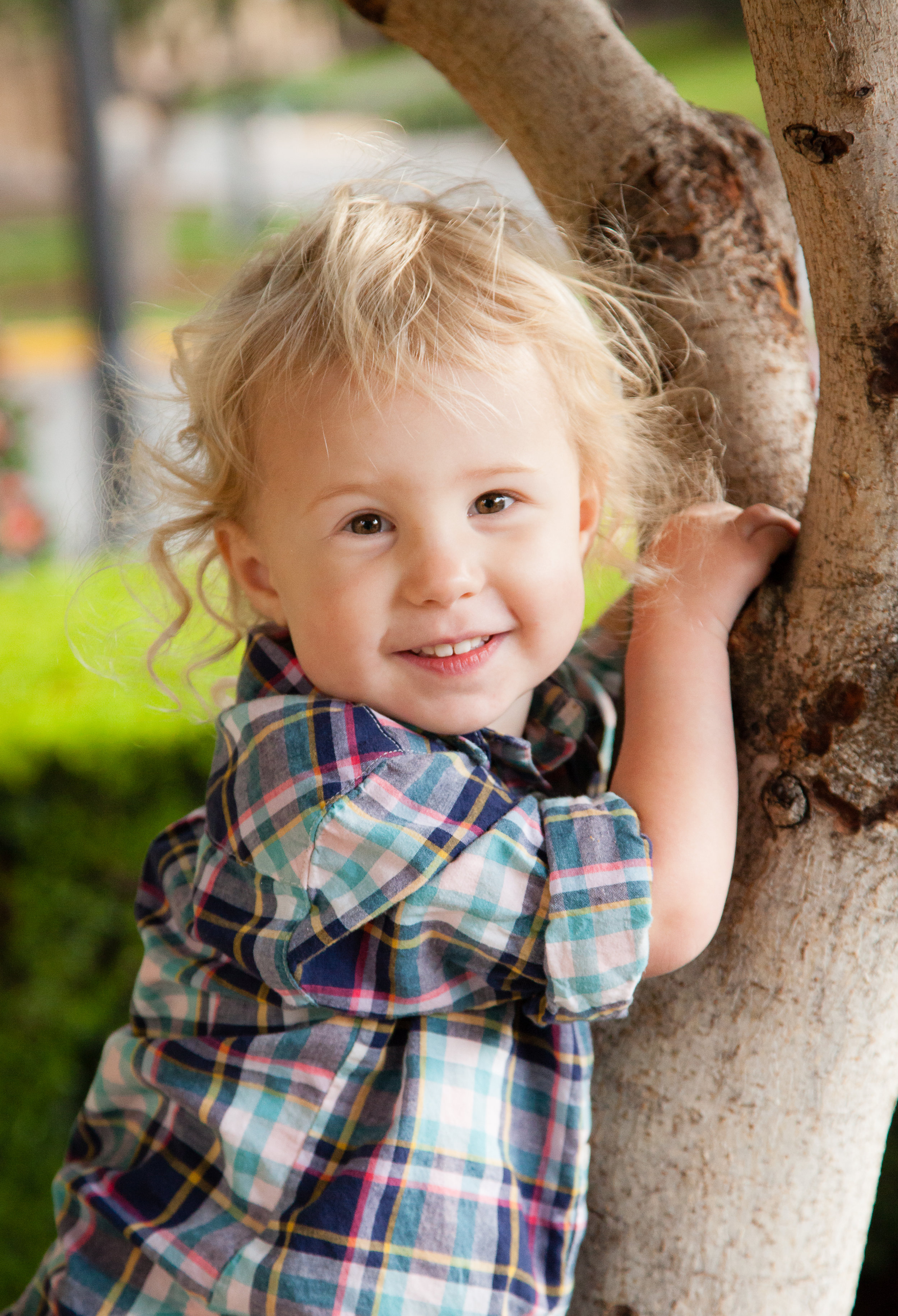 """The kids wanted to climb a tree so I said """"why not?"""""""