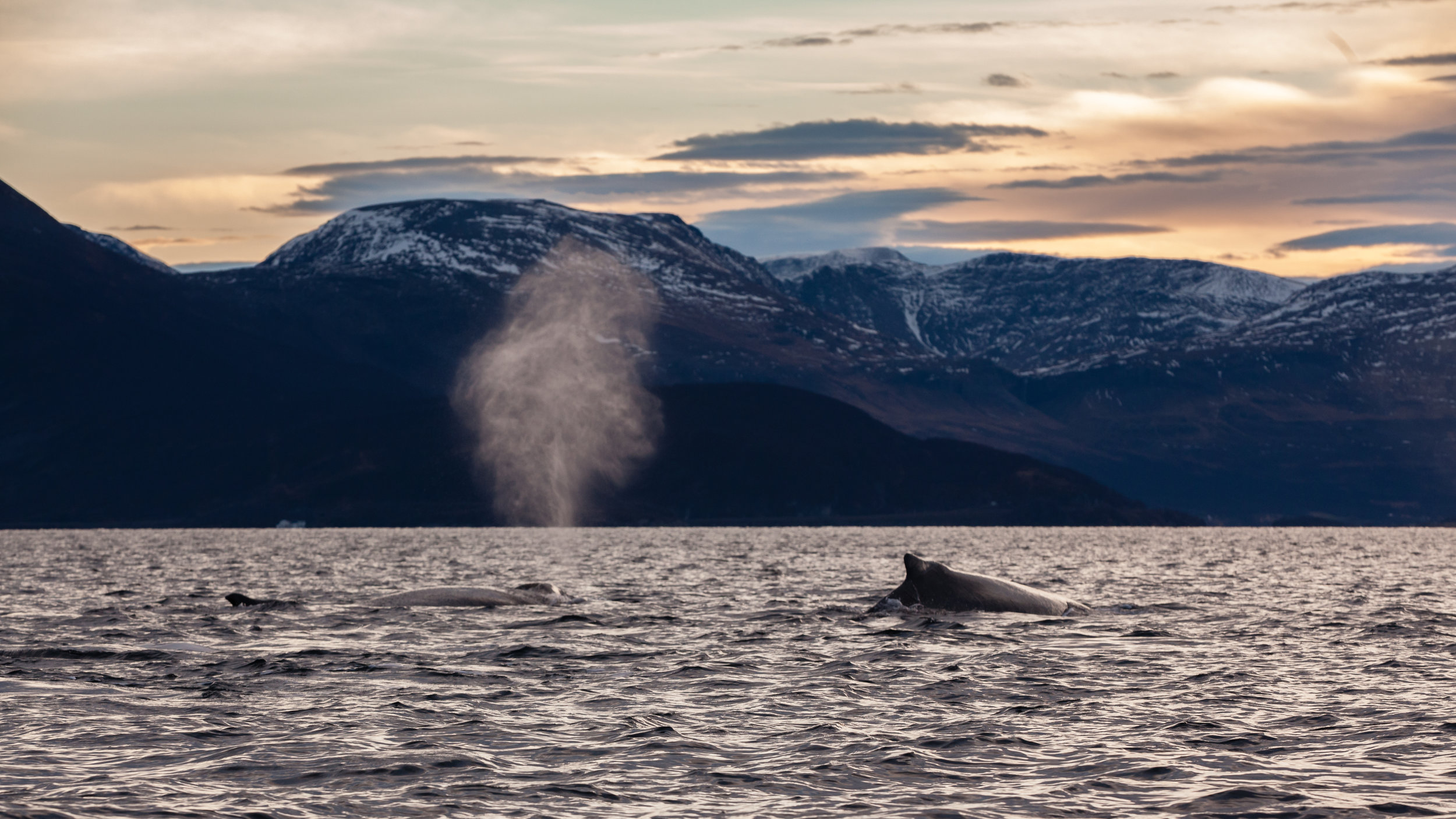 One of the most joyous sounds a person can hear… a whale breath.