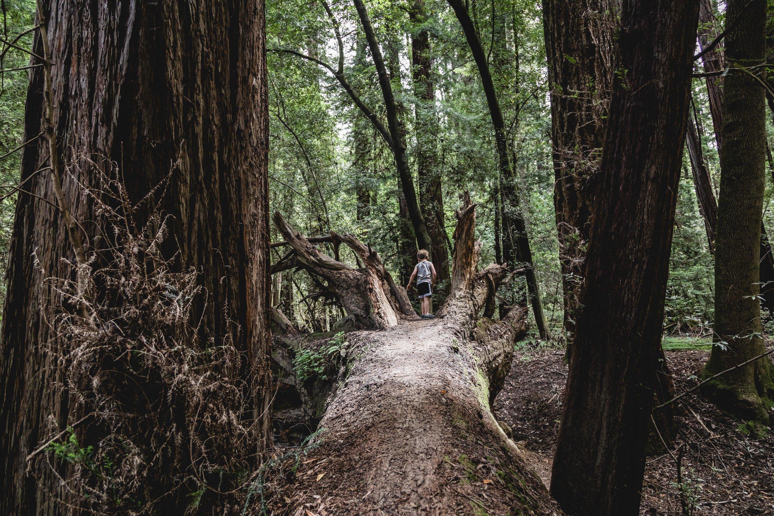 redwoods06-01-19-1728.JPG
