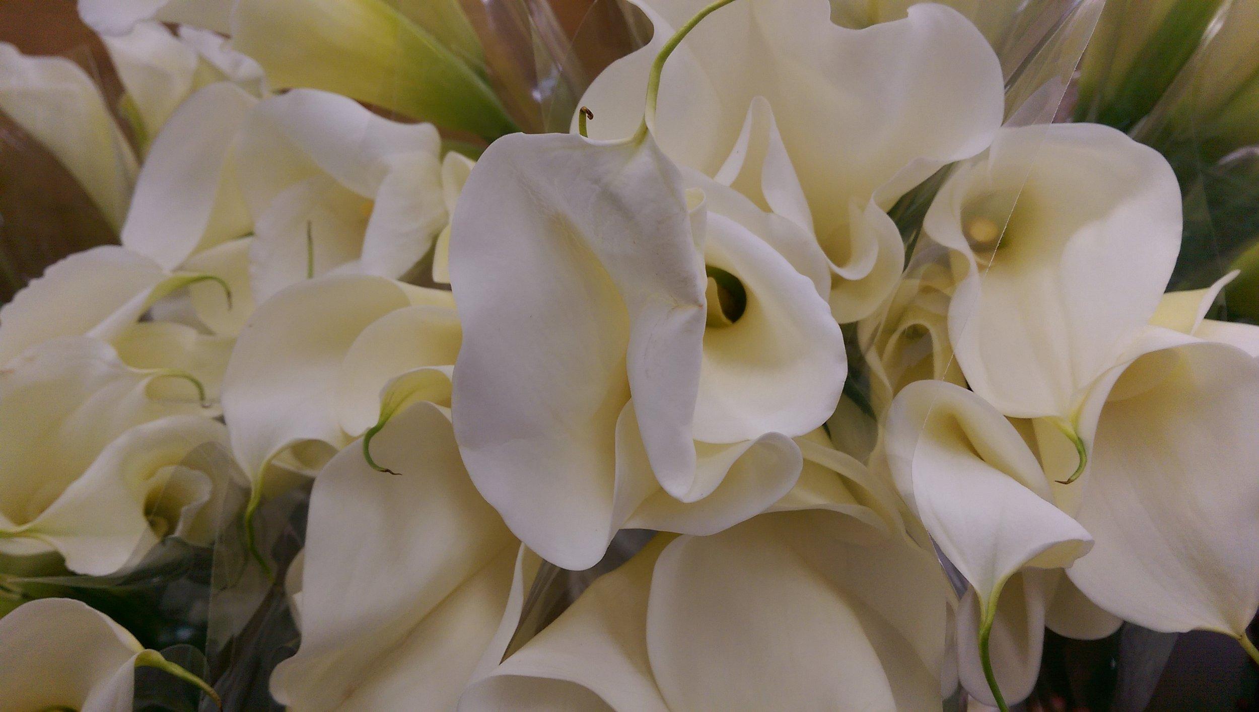 Calla Lilies  Year round