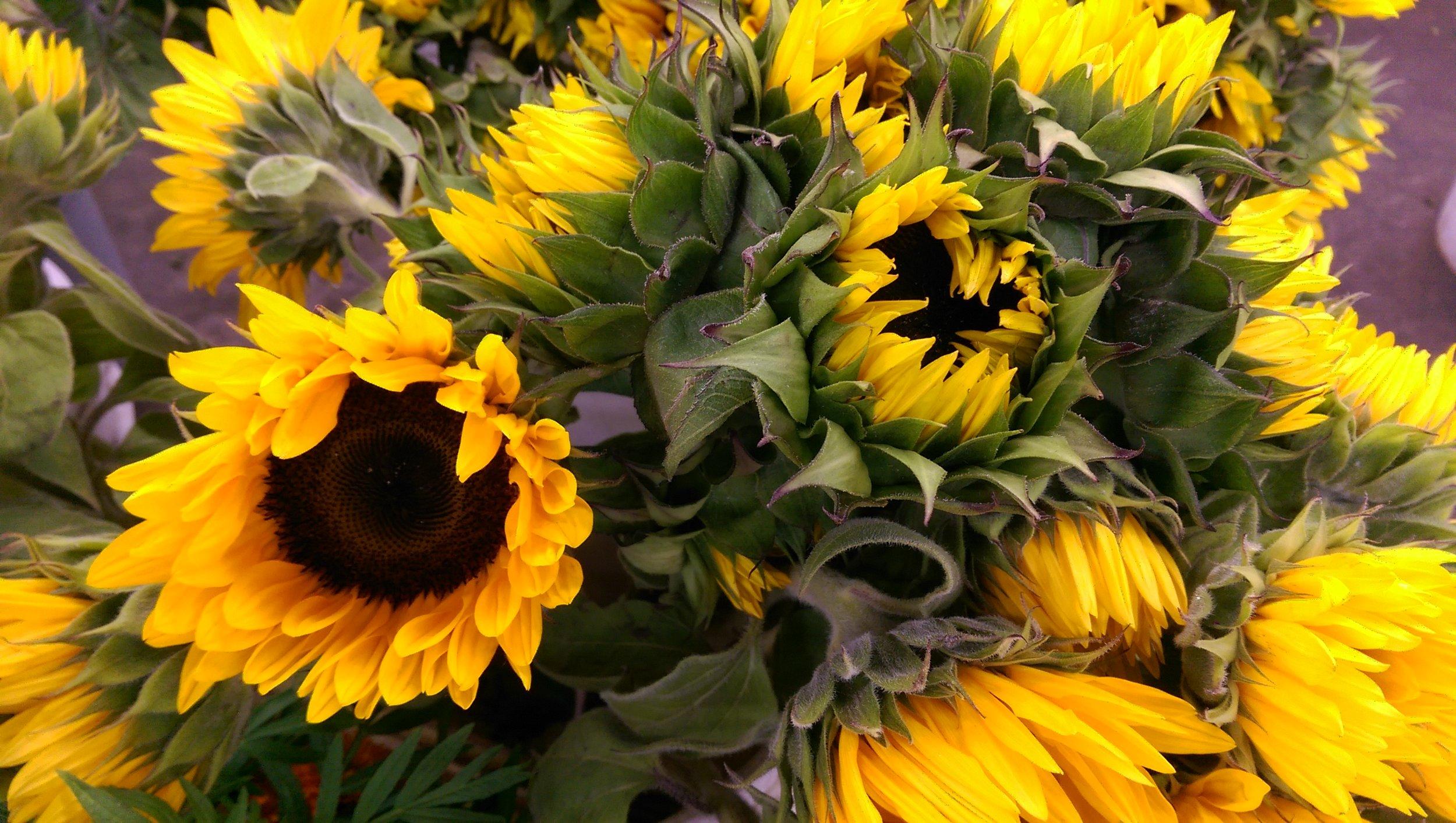 Sunflowers  Year round