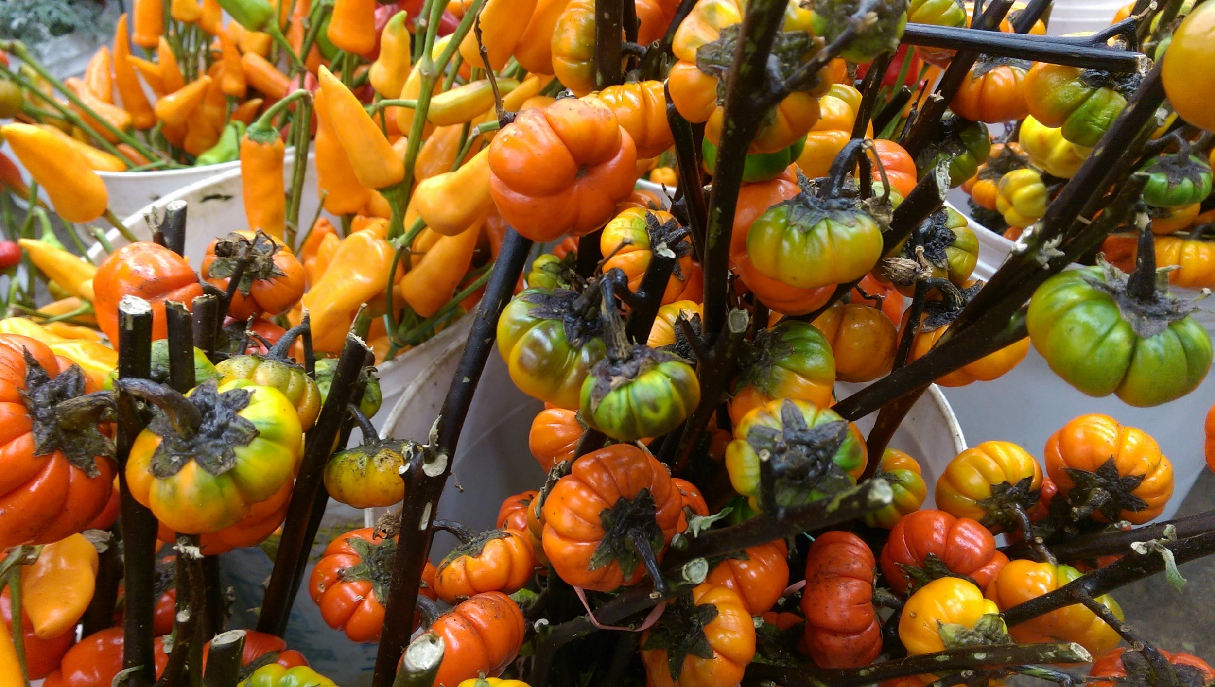 Peppers/Pumpkins  Seasonal