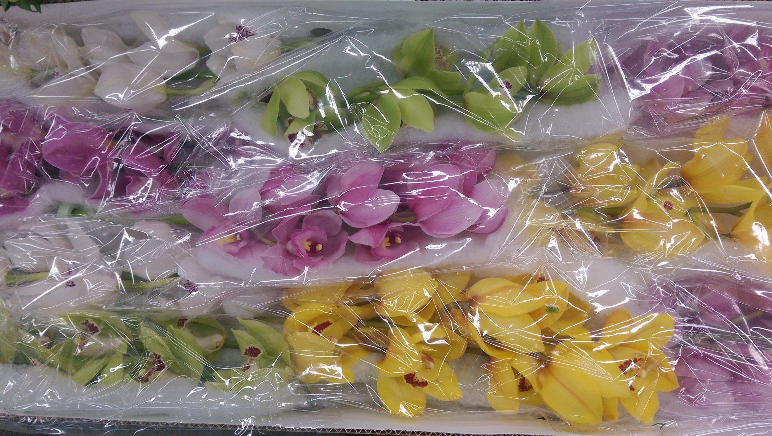 Cymbidium orchids  Year round