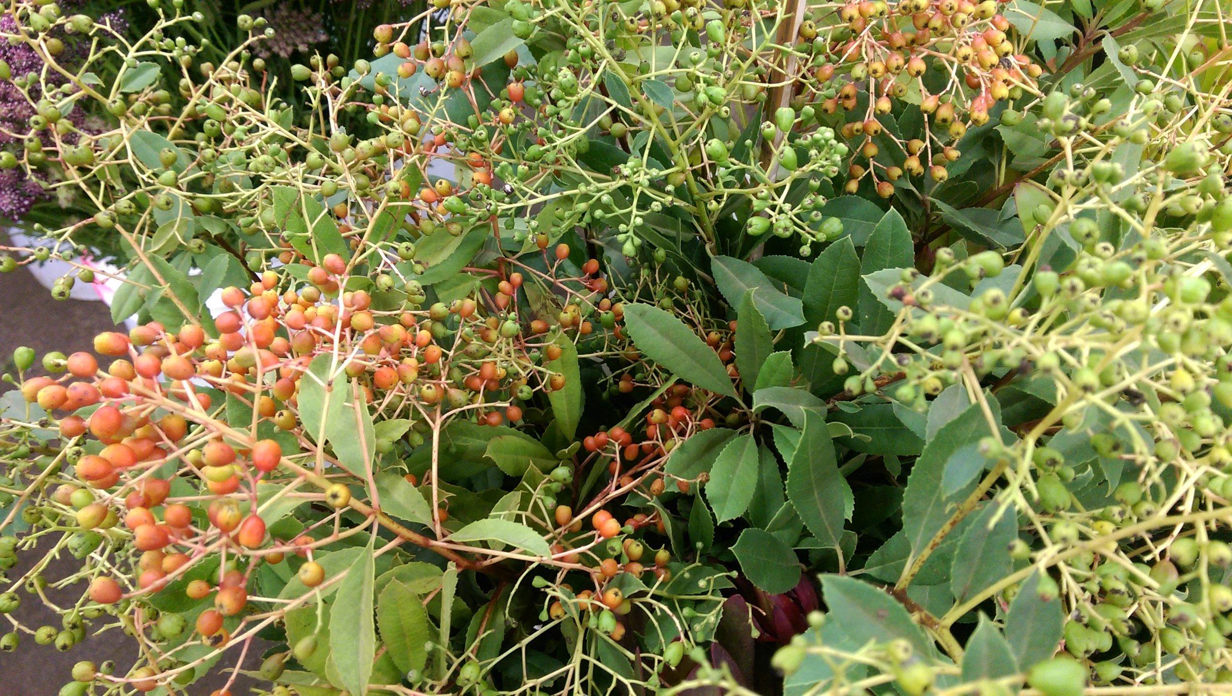 California Berry  Seasonal