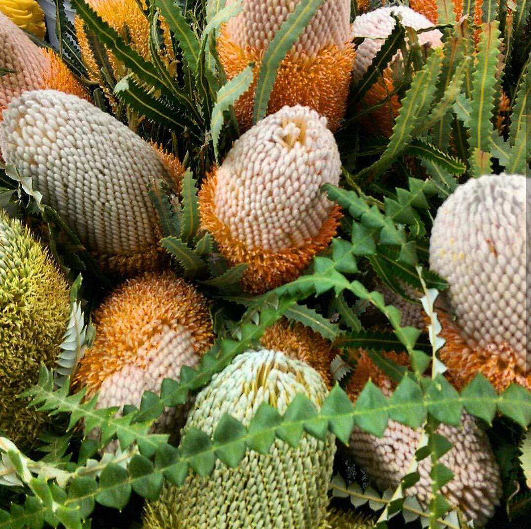 Banksia Protea  Seasonal