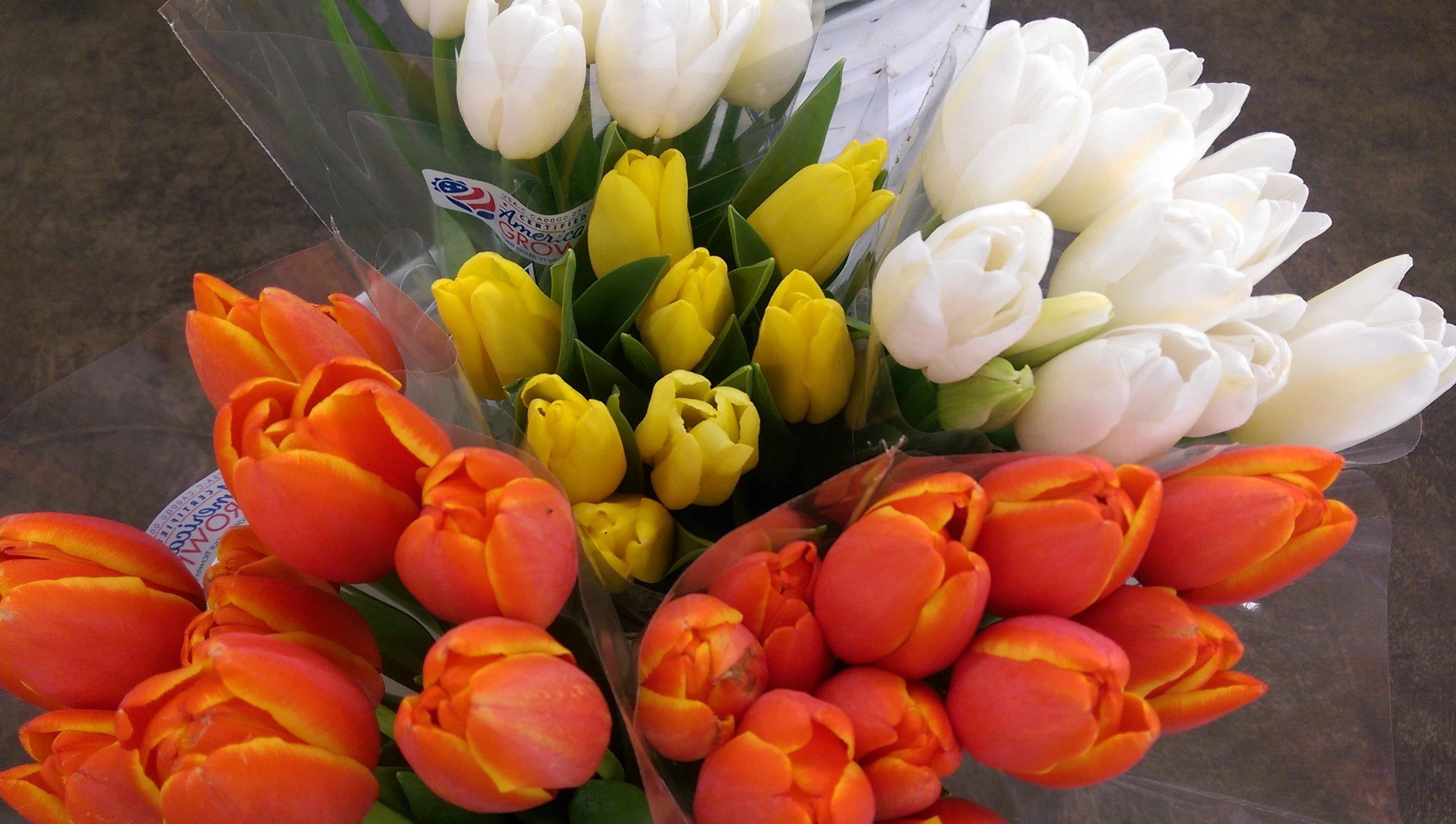 Tulips  Year round