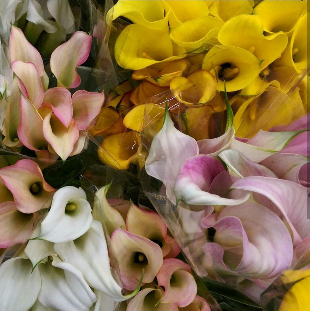 Mini Calla Lilies  Year round