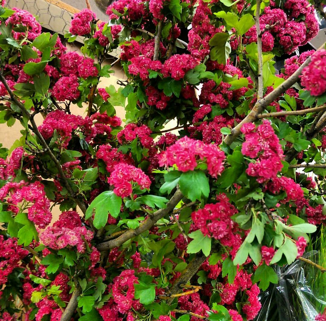 Blossoms  Seasonal