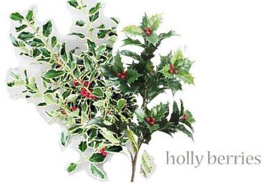 Hollyberry  Seasonal