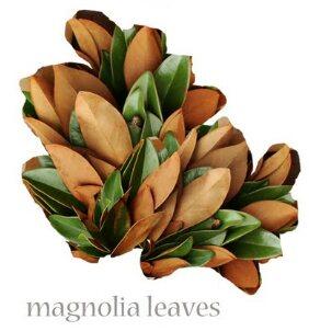 Magnolia  Seasonal