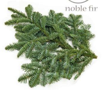 Noble pine  Seasonal