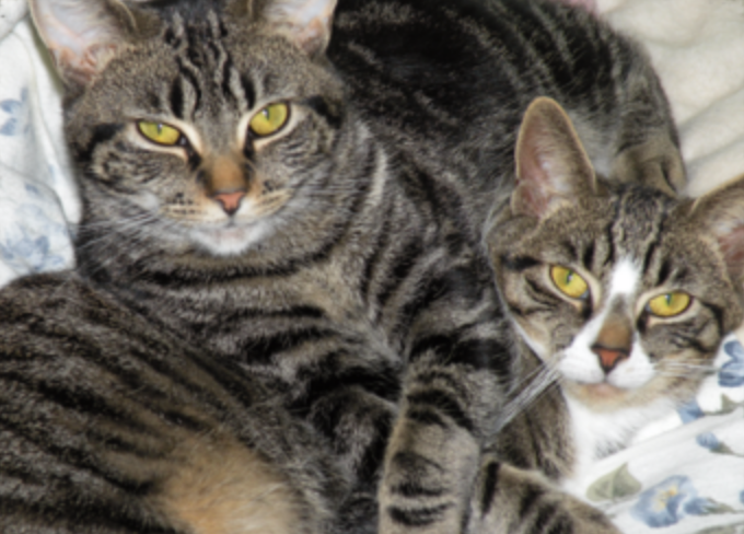 """Thelma & Louise (my first feral rescues who found their """"forever home"""" with me in 2008).The donation is made in their honor. - Thanks, LL"""