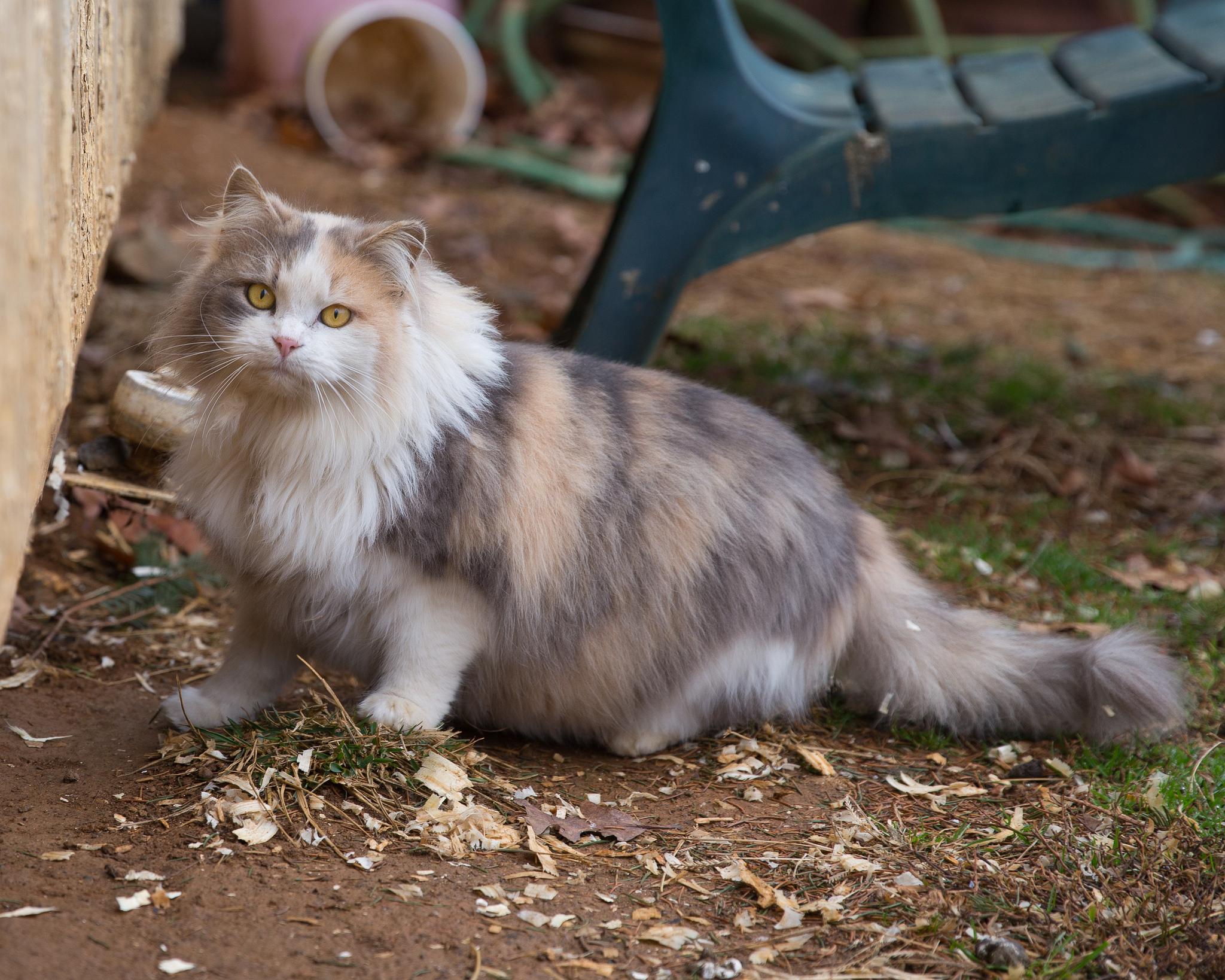 barn cat 3.jpg