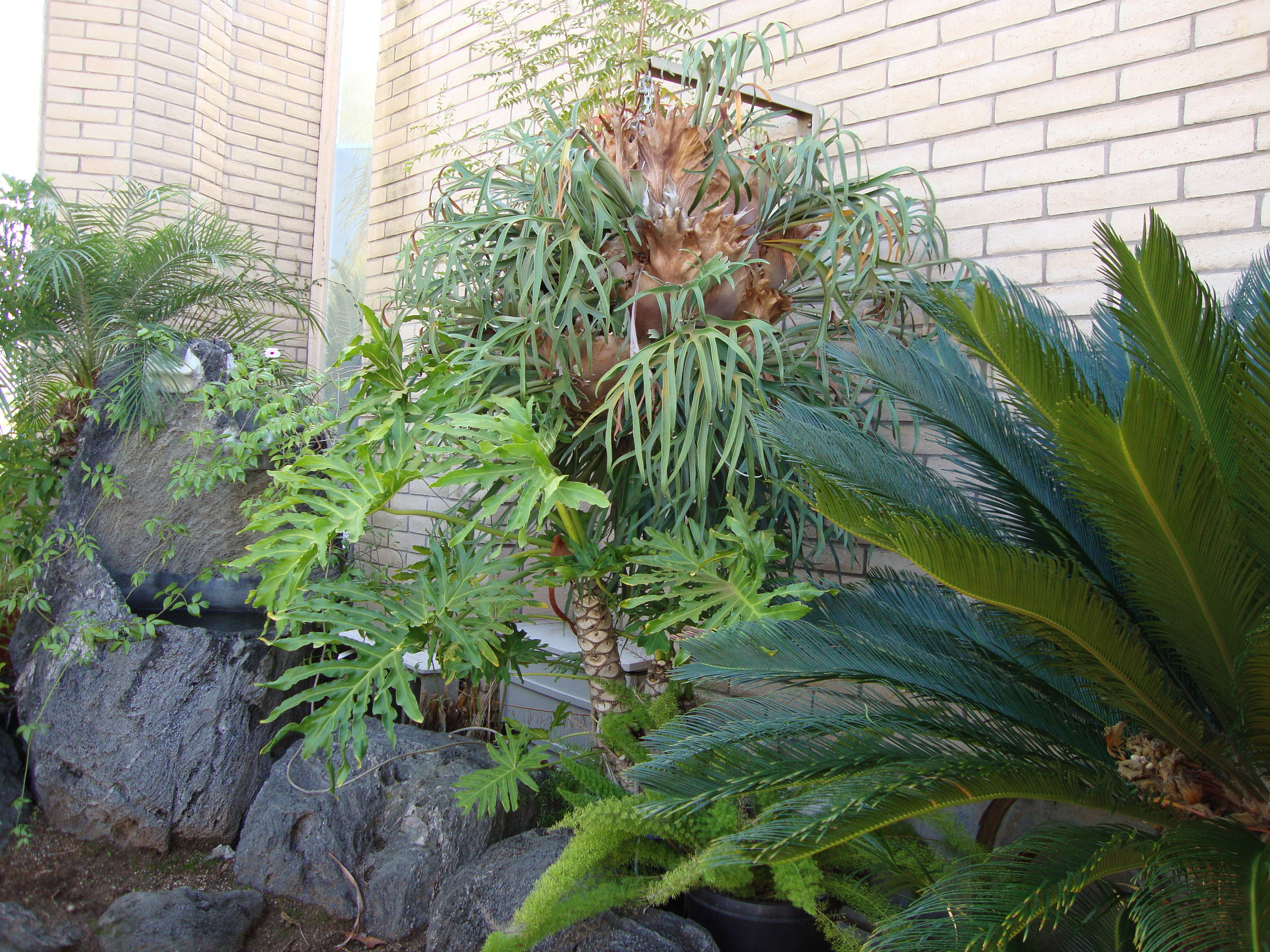 Tropical plants.JPG