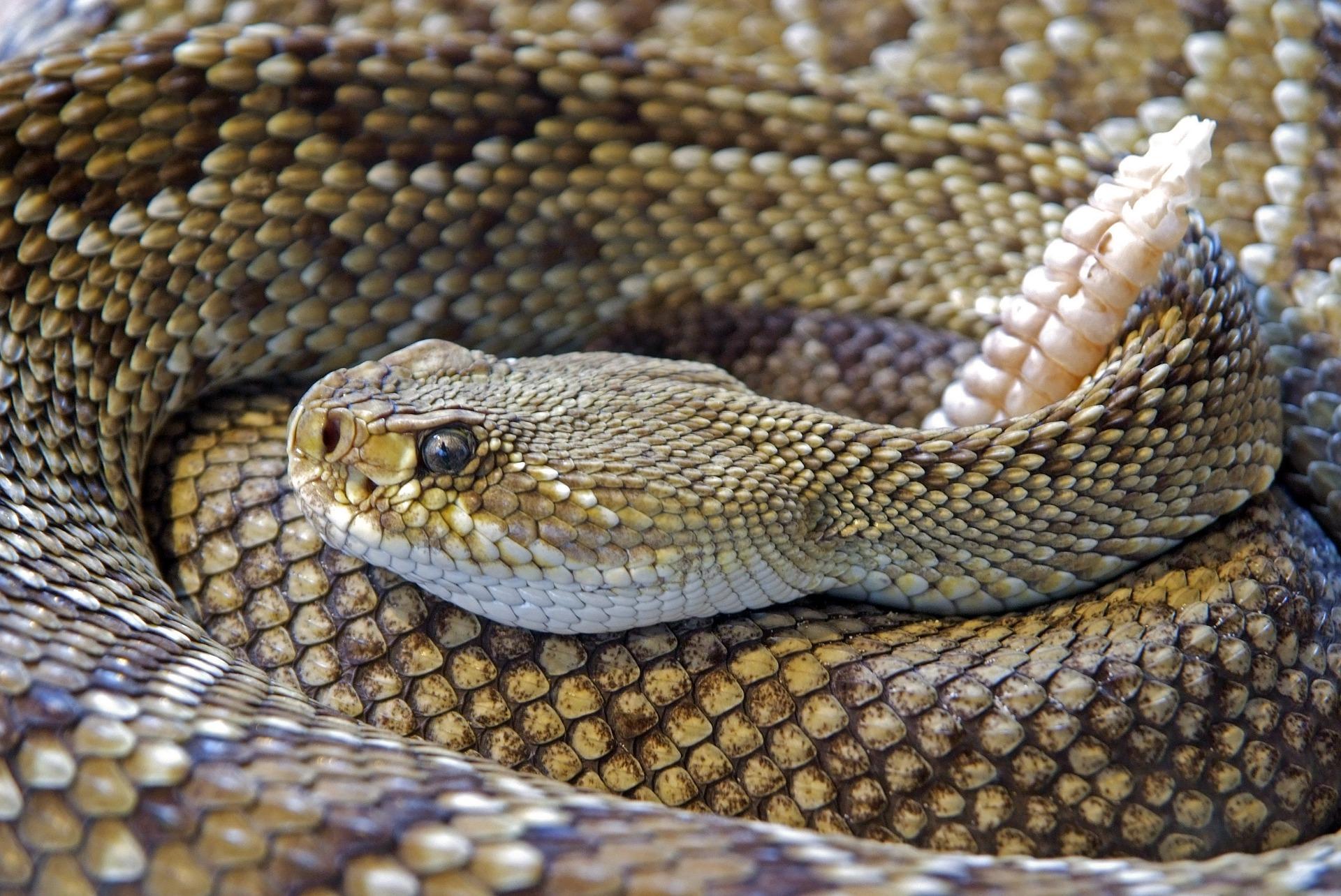 snake-751722_1920.jpg