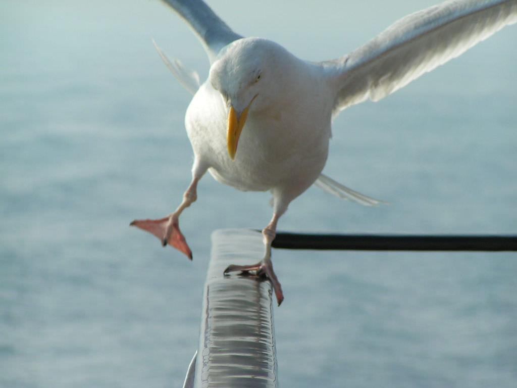 birdbalance.jpg
