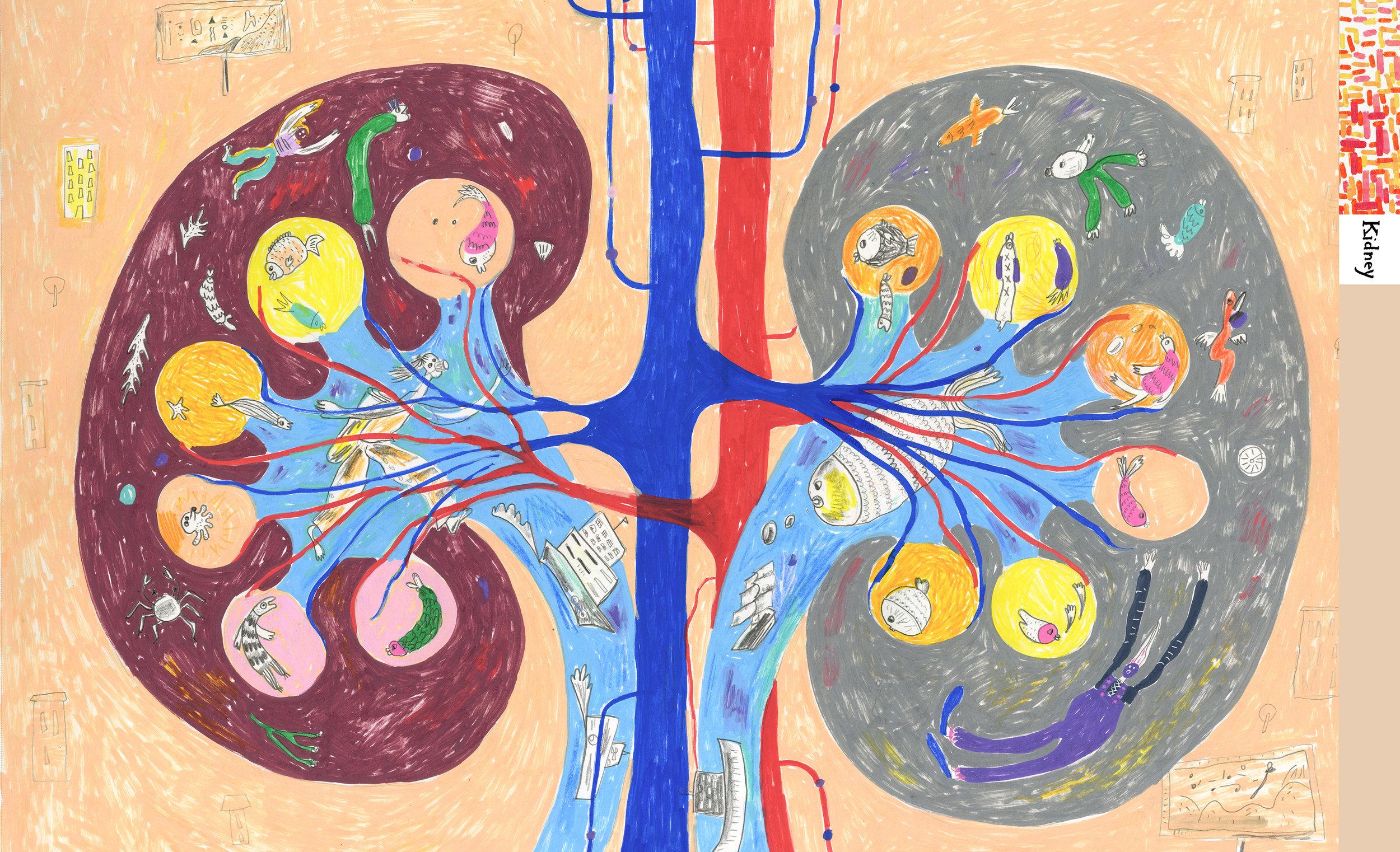 Meijia Xu 4 kidney.jpg