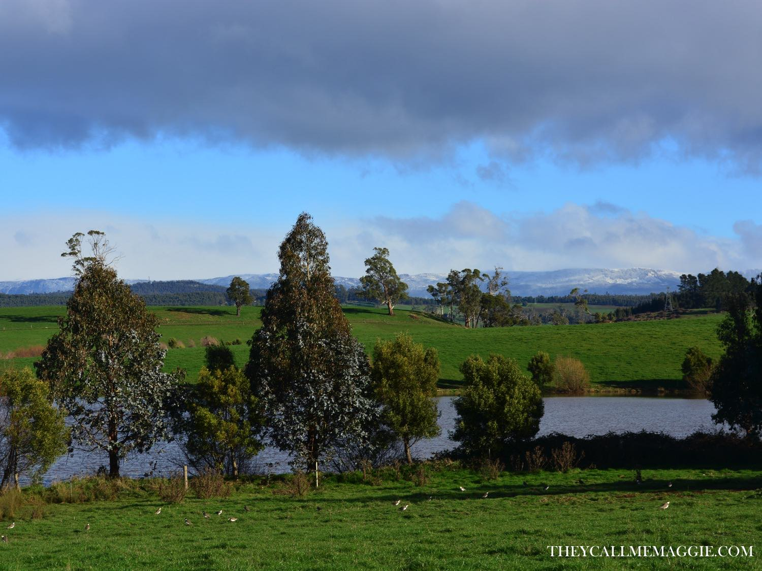 We caught a glimpse or two of Cradle Mountain during our drives between Launceston and Devonport. What. A. Tease.