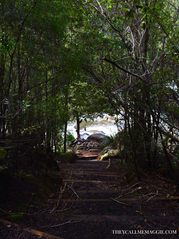 hollybank-forest.jpg