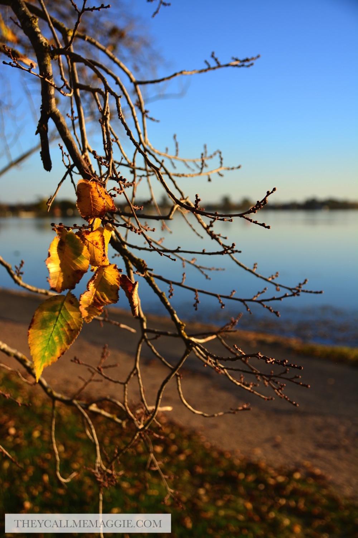 autumn-foliage.jpg