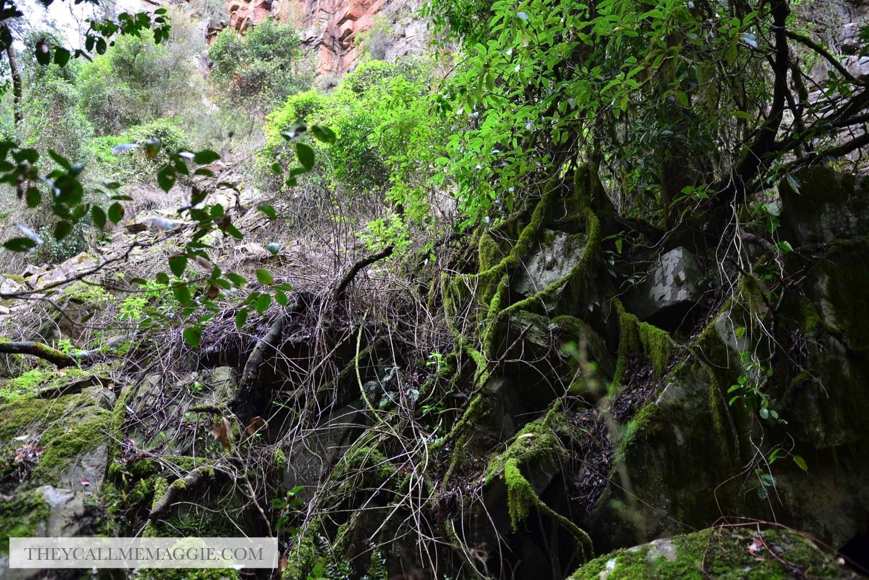 tree-moss.jpg