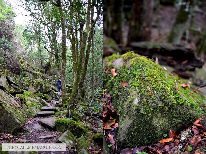 bush-hike.jpg