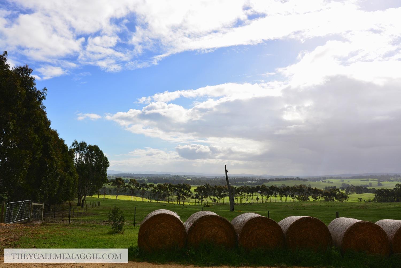 winery-views.jpg