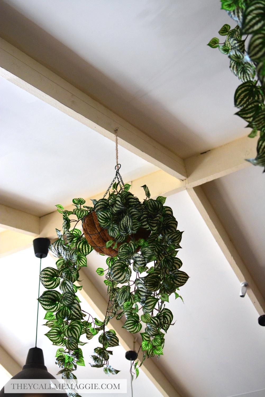 hanging-pot-plant.jpg