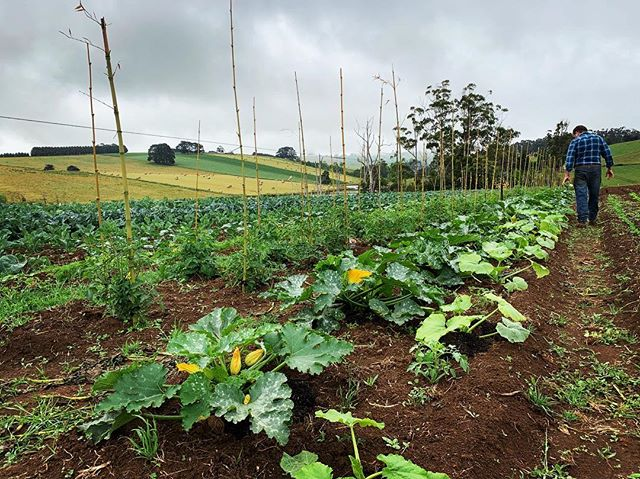 We have beautiful new season potatoes 🥔 broccoli 🥦 and cauliflower coming out of our paddocks. All available in our farm shop. Be sure to stop past, say g'day and pick up some delicious fresh, home grown, hand picked veggies 💛