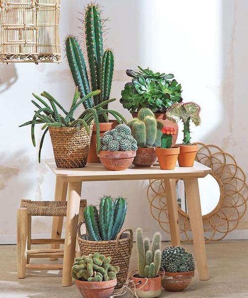 Cactus + wicker