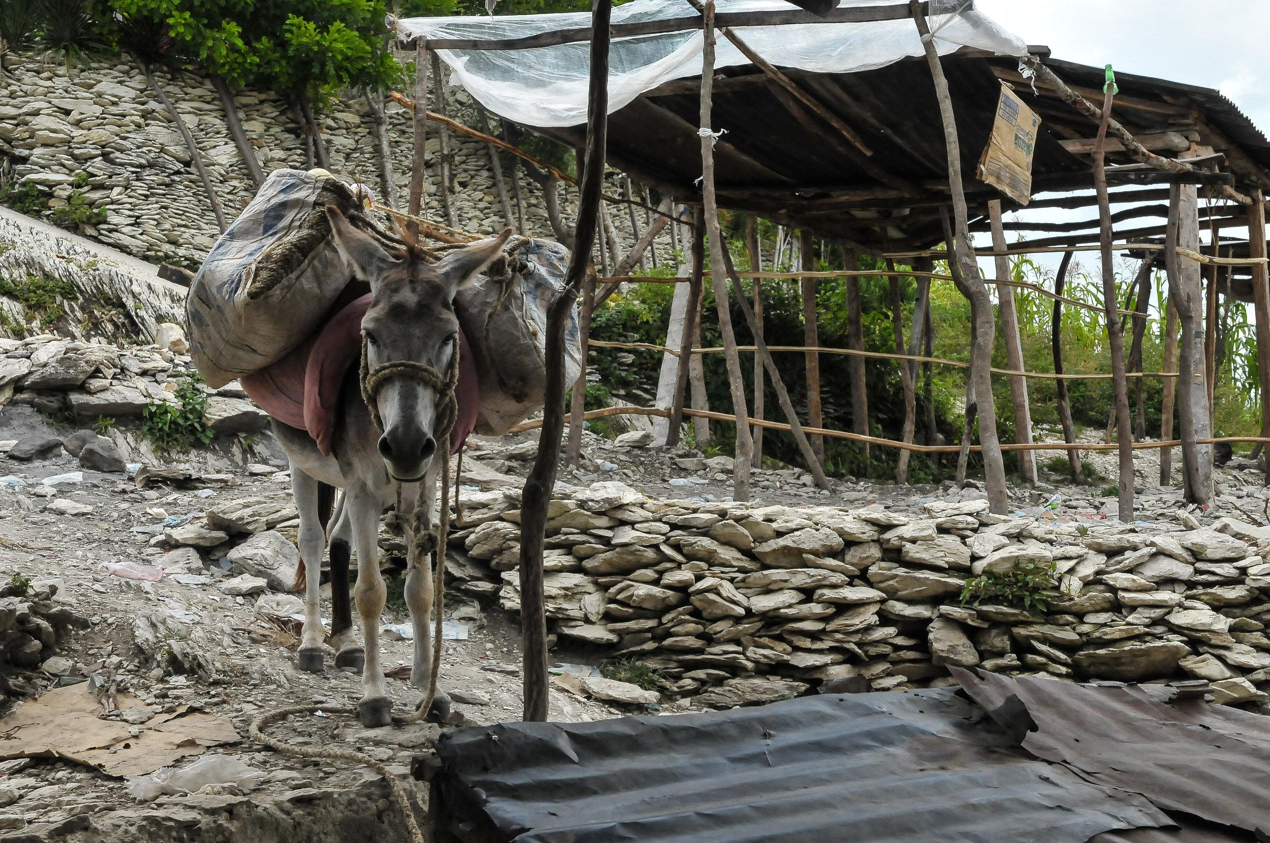 Haiti 2013 LR-0326.jpg