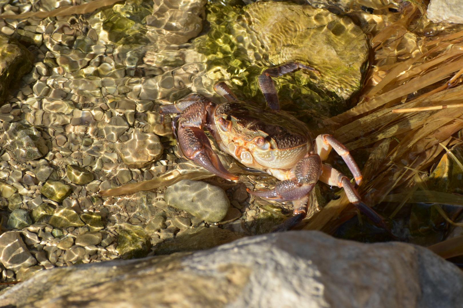 Animal encounters in Ein Gedi