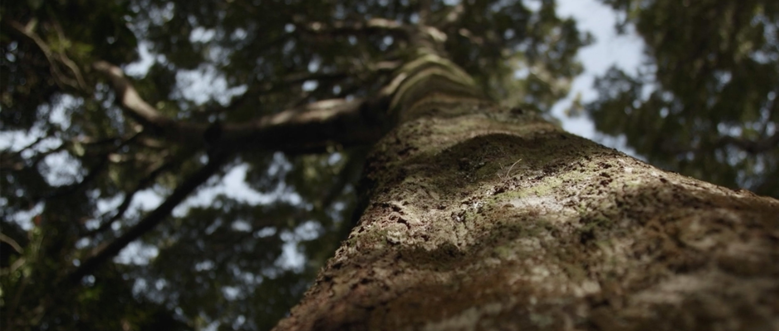 Akina Tree.jpg