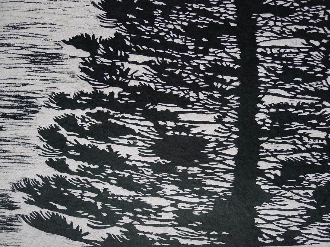 Araucaria heterophylla woodcut