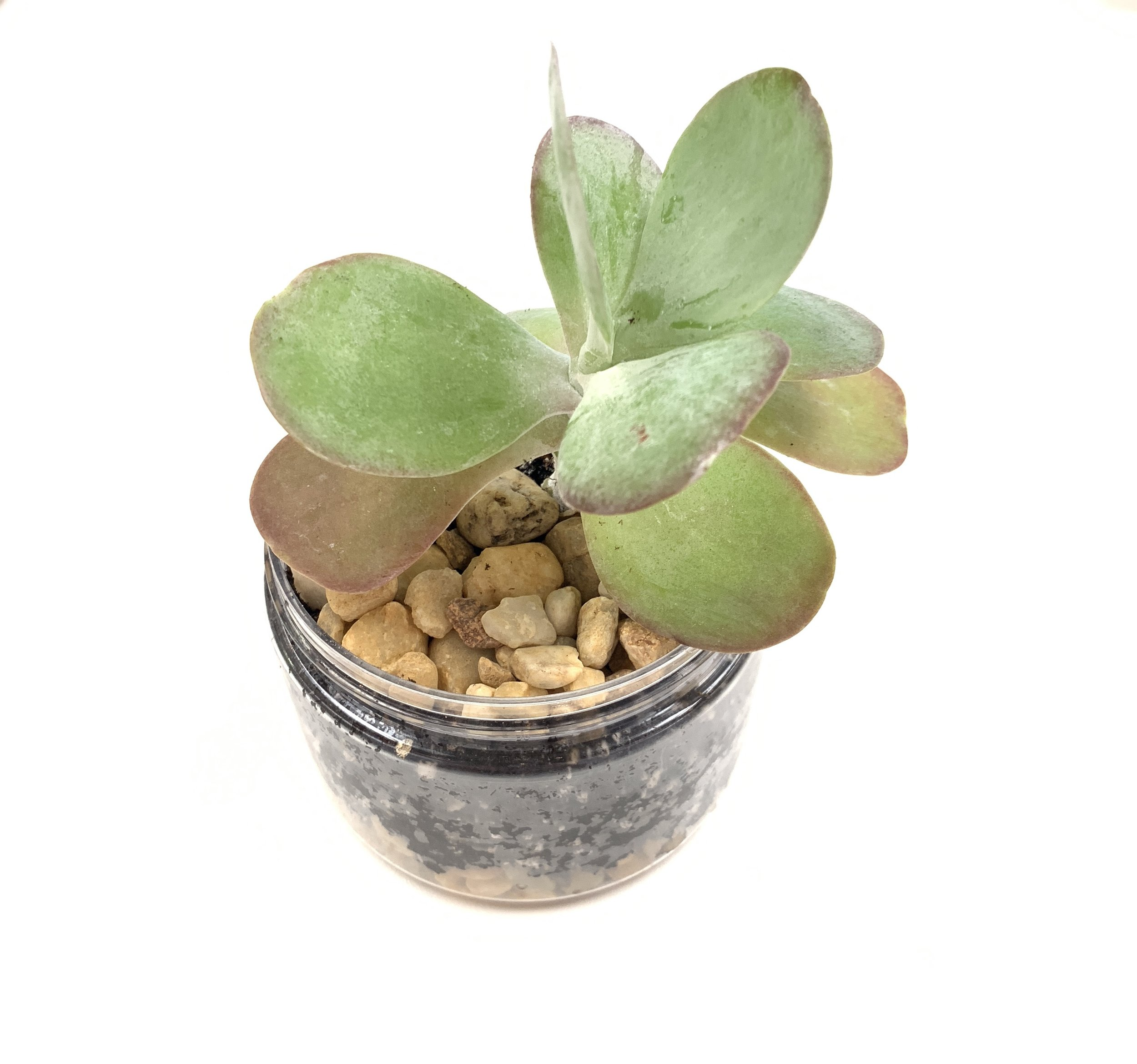 Plants - Create a hole in the bottom of your jar for drainage, fill with the appropriate soil and rocks, and plant that little succulent!